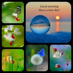 Colors Moods Best Of Good Morning Collage Made by Kadk S World