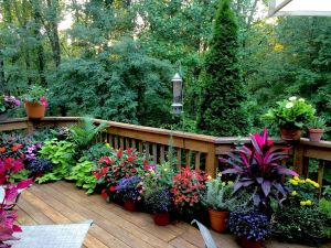 Spring Landscaping Best Of Going to Be My Deck Goals Next Spring since the Goats Eat